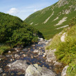 Stock Photo: Mountains brook