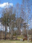 Foresta con luce solare — Foto Stock