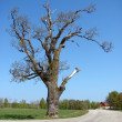 Old tree on side of road — Stock Photo #5603511