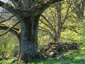 森林与阳光 — 图库照片