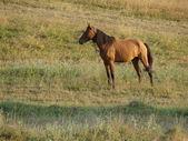 Cavallo sul campo — Foto Stock