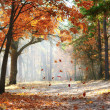 Fall in the park — Stock Photo #6667662