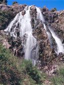 Waratah Falls — Stock Photo