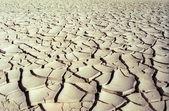 Dry road — Stock Photo