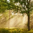 Rays of sunlight - Stock Photo