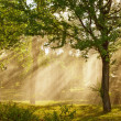 Stock Photo: Rays of sunlight