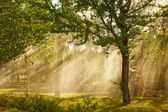 Rays of sunlight — Stock Photo