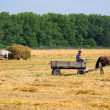 Collect a haystack — Stockfoto