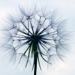 Dandelion — Stock Photo #6422284