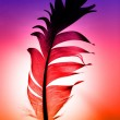 Colorful feather — Stock Photo #6422459
