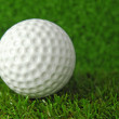 Golf ball on the green grass turf — Stock Photo