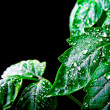 Leaf with rain droplets — Stock Photo #5662959