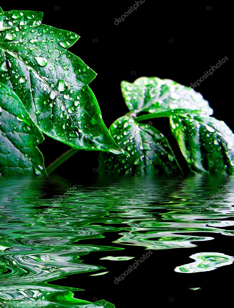 Green leaf with rain droplets — Stock Photo #5705691