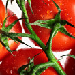 Ripe tomato — Stock Photo #5898518