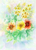 Flowers nasturtium — Stock Photo