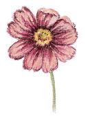Kwiat kosmos. obraz, pastelowe — Zdjęcie stockowe