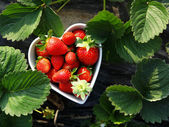 Strawberry in heart shape bowl — Stock Photo