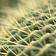 Stock Photo: Cactus close up