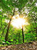 Morning sunbeam shine through green forest — Stock Photo