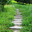 Stock Photo: Path go up mountain