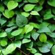 Leaf background — Stock Photo #5936614