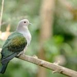 Wild Bird — Stock Photo