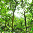 Fresh green forest with sunbeams — Stock Photo