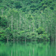Royalty-Free Stock Photo: Lake with tree