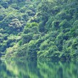 Lake with tree — Stock Photo