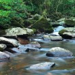 Water spring in jungle — Stock Photo