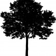 Tree silhouette — Stock Vector