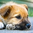 Puppy sleeping on the street — Stock Photo