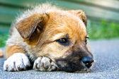 Puppy sleeping on the street — Stock Photo