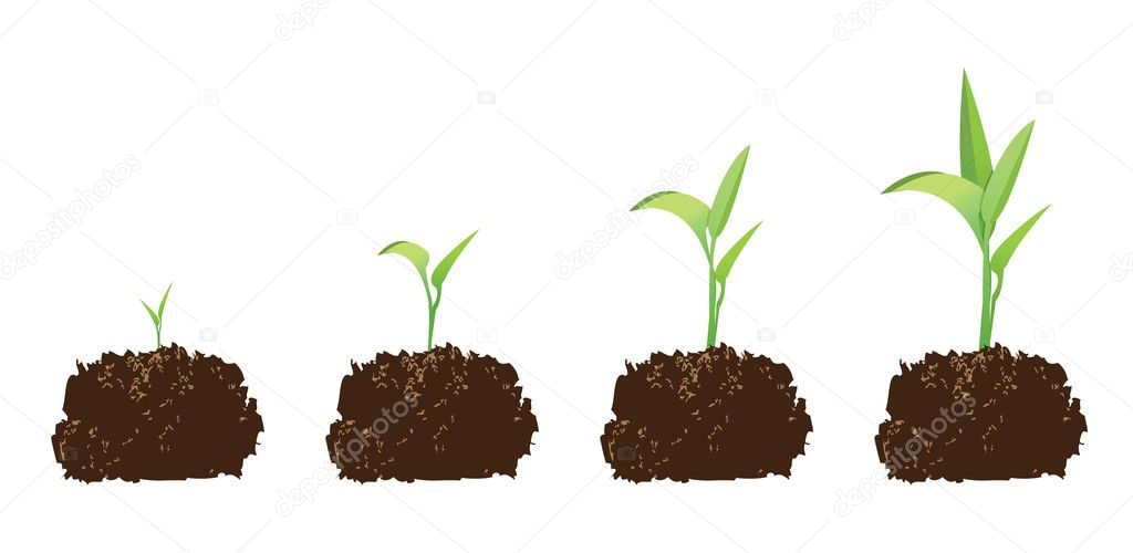 Seedling or germination of a seed, to illustrate concept of growth.   Stock Vector #5890089