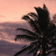 Palm at dawn - Foto de Stock