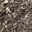 Leaf compost mulch for background — Stock Photo