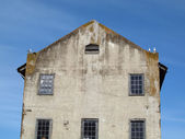Four western gulls birds hangout on top of old building — Stock Photo