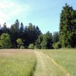 Mowed Path in a grass field with Large Pines around — Stock Photo