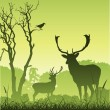 Royalty-Free Stock Imagem Vetorial: Male Stag Deer