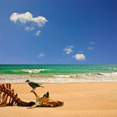 Beach with Carcass — Foto Stock