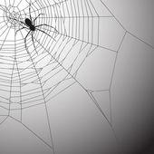 蜘蛛 — 图库矢量图片