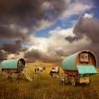 Gypsy Wagons, Caravans — Stock Photo