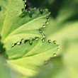 Green leaf — Stock Photo #6346924