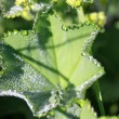 Green leaf — Stock Photo #6346941