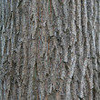 Stock Photo: Wood texturew