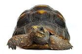Želva — Stock fotografie