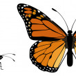 Stock Vector: Monarch Butterfly