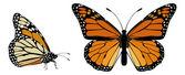 Farfalla monarca — Vettoriale Stock