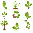 Green Plants Set - Stockvectorbeeld