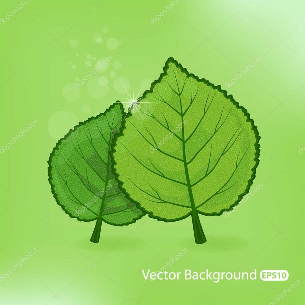 Vector Natural illustration — Stock Vector #5638580